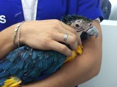 金刚鹦鹉获得了3D打印的钛喙,拥有第二次生命
