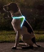 把狗狗变成闪光点