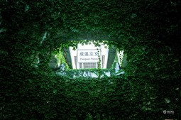 """美哭了!成都一高架变""""绿色走廊"""""""
