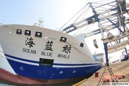 """全球最大的客箱船""""海蓝鲸""""轮正式投入航线营运"""