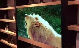 透明电视机 关机后就是一块玻璃
