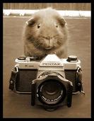 动物界的摄影大师上线了:霸占相机有模有样