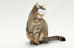当我的宠物好姓胡|猫用 VR
