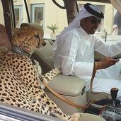 壕无人性的迪拜,玩起黑科技炫富到极致!