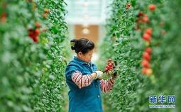 江西全南:探访高山蔬菜种植地