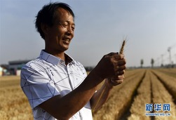 山东临淄:机械化农业迎夏收