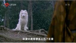皇上臣妾真的是白狐